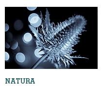 Natura, fotografia przyrody. Kwiaty, rośliny, jeziora, góry ... dla każdego coś miłego.